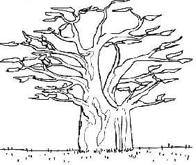 20080524184019-baobab.jpg