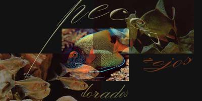 20080728101924-pez-de-colores.jpg