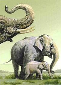 20080730104332-dibujos-elefantes-1-.jpg